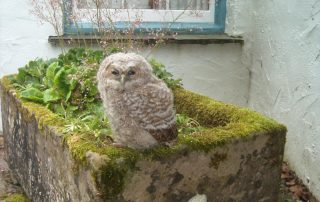 Owl visitor at Nest Barn