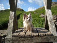 Dog Friendly accommodation at Nest Barn