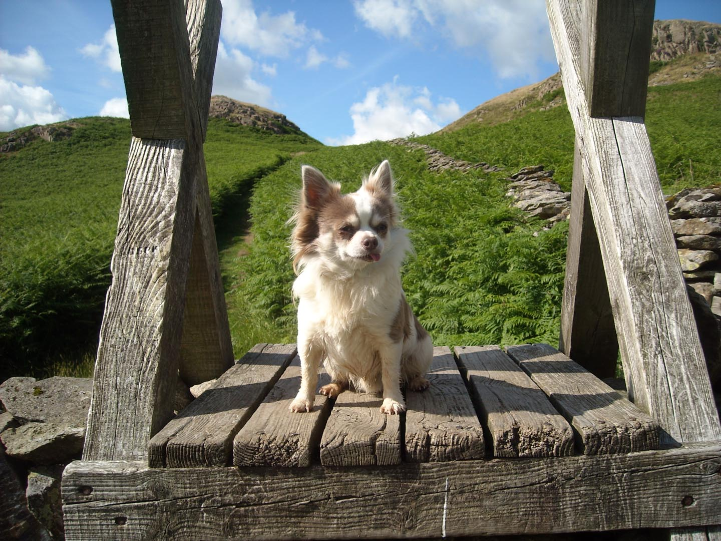 Dog Friendly accommodation at Nest Barn